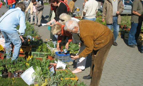 Pflanzen- und Krammarkt in Rethwisch